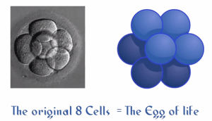 Genesis Pattern - Morphogenic Structure