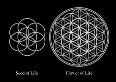 Seed of life inside Flower of life